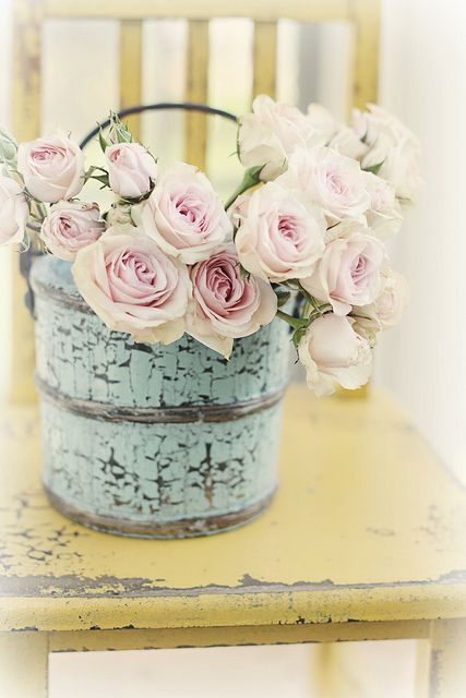Pink roses in blue pail