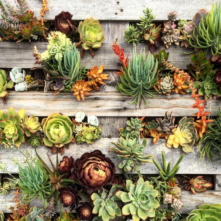 We never met a pallet garden we didn't like #jungalowstyle