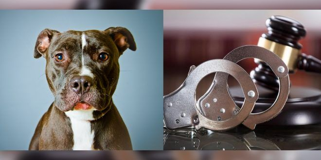 6 Months Jail For Pitbull Owners After Their Dog Mauled A 12 Year