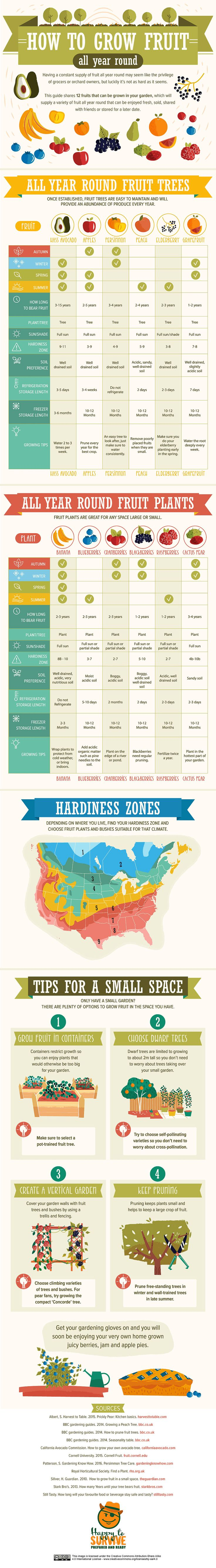 The Ultimate Fruit Gardening Guide in Handy Infographic Form