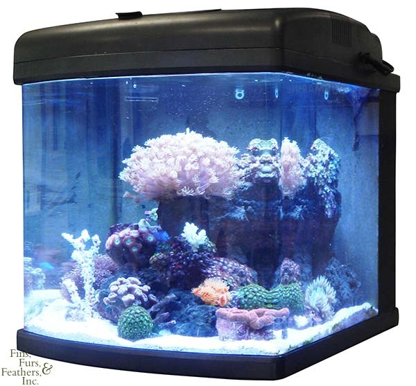18 best clown fish tank images on pinterest. Black Bedroom Furniture Sets. Home Design Ideas
