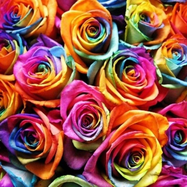 Essential Top - MOLECULAR RAINBOW ROSE by VIDA VIDA Online Cheap Price Clearance Exclusive Discount Fake Free Shipping Pick A Best DeC1DBu