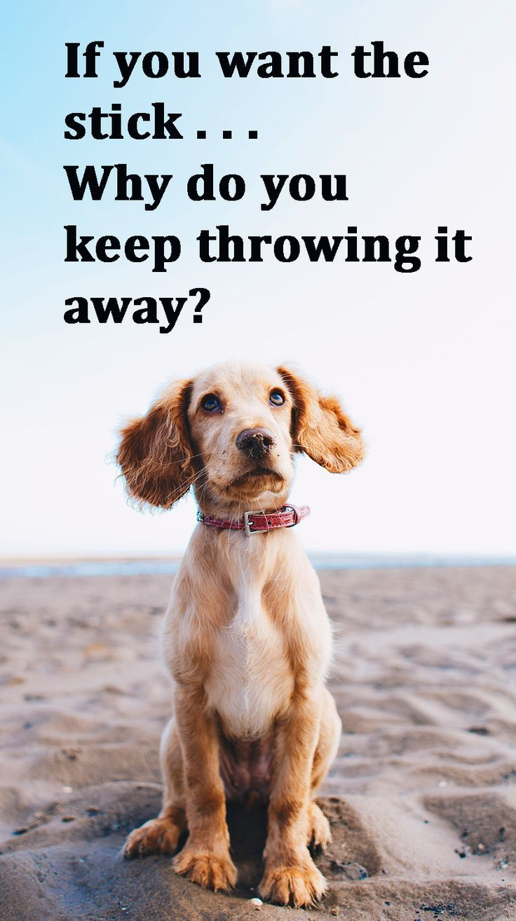 A Smart Dog Wonders Why His Human Keeps Throwing The Stick And