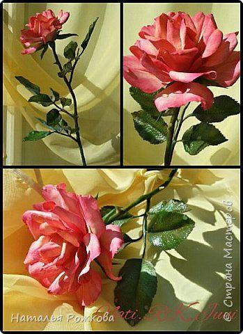 моя роза...  фото 4