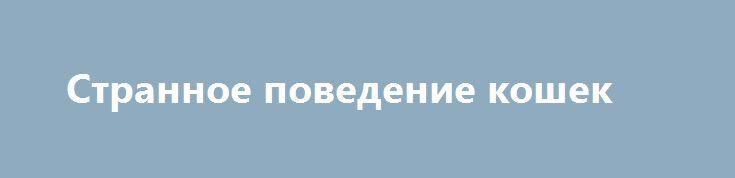 Странное поведение кошек http://apral.ru/2017/06/13/strannoe-povedenie-koshek/  Если в большинстве случаев кошки предпочитают спокойно лежать в каком-нибудь [...]