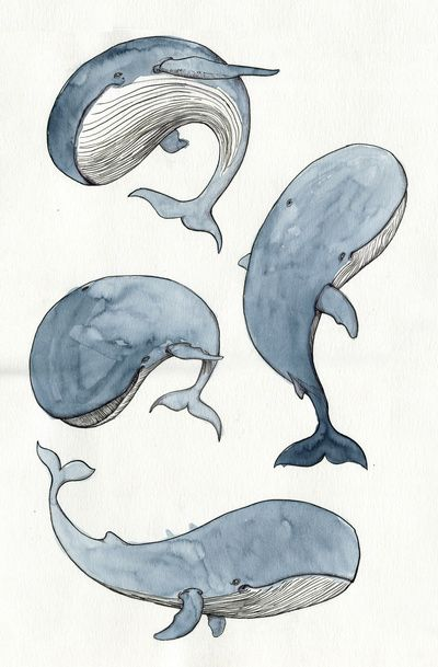 Beautiful watercolour whales.