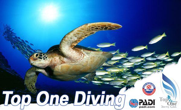 Diving Club ecosostenibile Lazio:Top One Diving