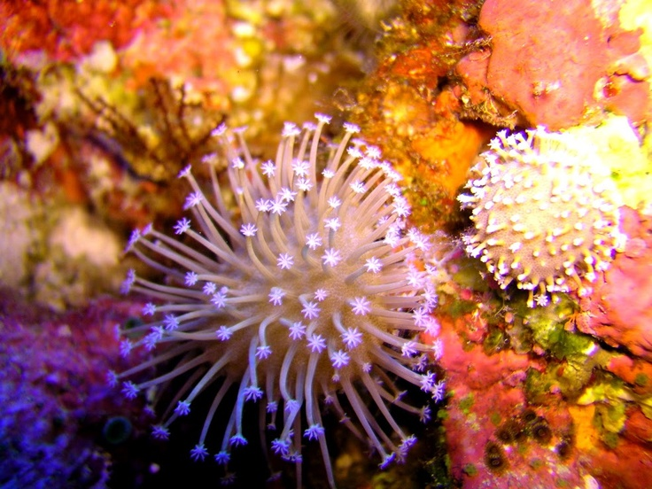 Spectacular Coral Reefs in Sabah