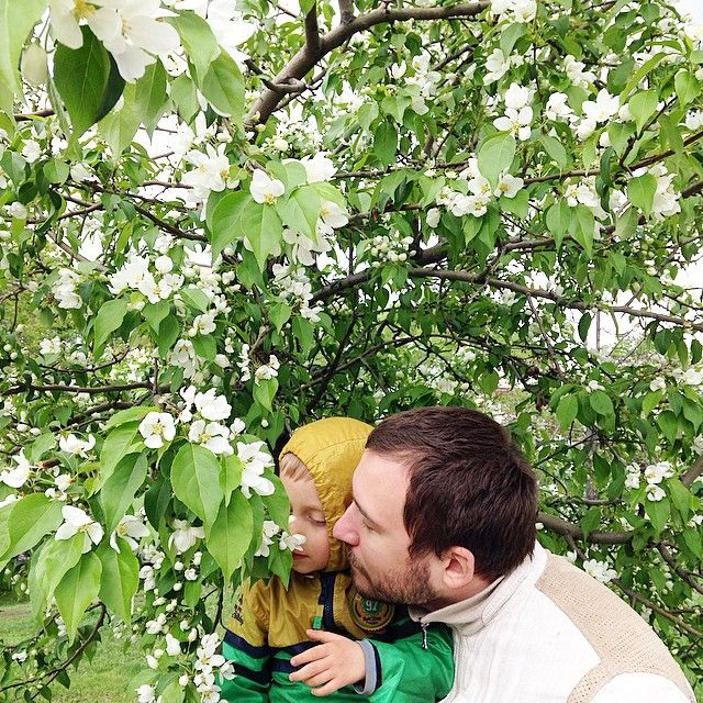We also finally got a blossom apple trees /и у нас наконец все зацвело #family #love #fathers #fatherhood #kid #kidsportrait #children #childhood #chel_blog #instamam #instagood #instamoms #instanature #instagramrussia #blossom #spring #urbanlandscape #nature #naturelovers #daddy #thepledfamily
