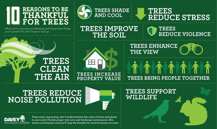 10 Reasons To Be Thankful For Trees Landscape Care Book Design Inspiration Landscape Maintenance