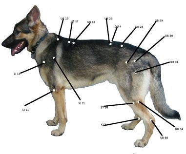 Acupuncture For Dogs Chart Amp Video Mans Best Friends