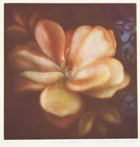 Christine Johnson 'Winter Rose' - etching on paper