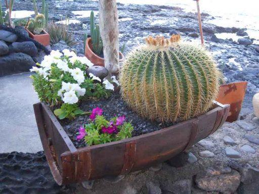 34 mejores im genes sobre flores favoritas naturales en - Macetas originales para plantas ...