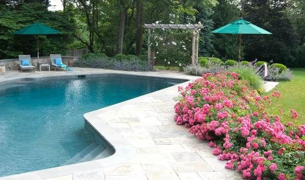Flower carpet pink adds privacy and a bit of protection to for Decor around swimming pool