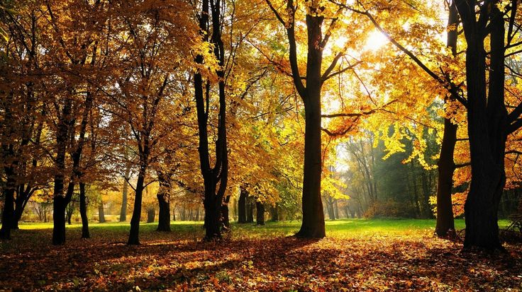 Скачать обои краски, парк, жёлтые, Осень, солнце, Обои, листья, раздел пейзажи в разрешении 1366x768