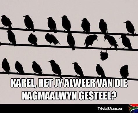 We all have that one friend that drinks too much communion wine #southafrica #afrikaans #wine - Enjoy the Shit South Africans Say! #CapeTown #africa #comedy #humor #braai #afrikaans