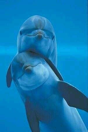 Kissing Dolphin..