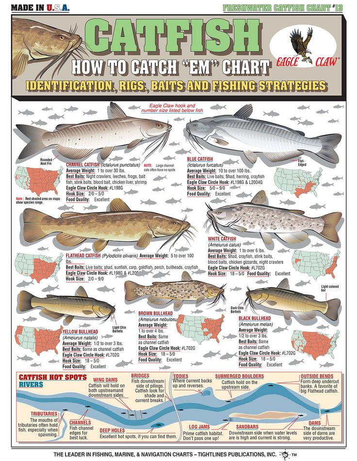 Best 25 fishing rigs ideas on pinterest bass fishing for How to fishing