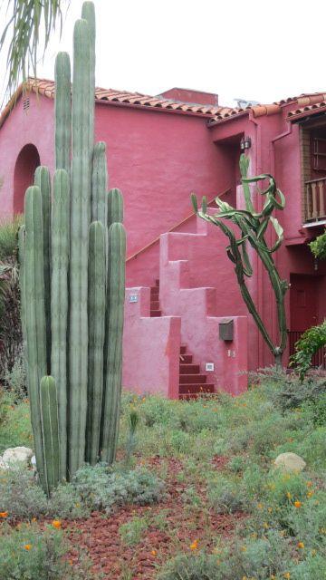 Vor einem Hintergrund aus kühlem Rosa heben sich die bizarren Formen graugrüner Sukkulenten ab.