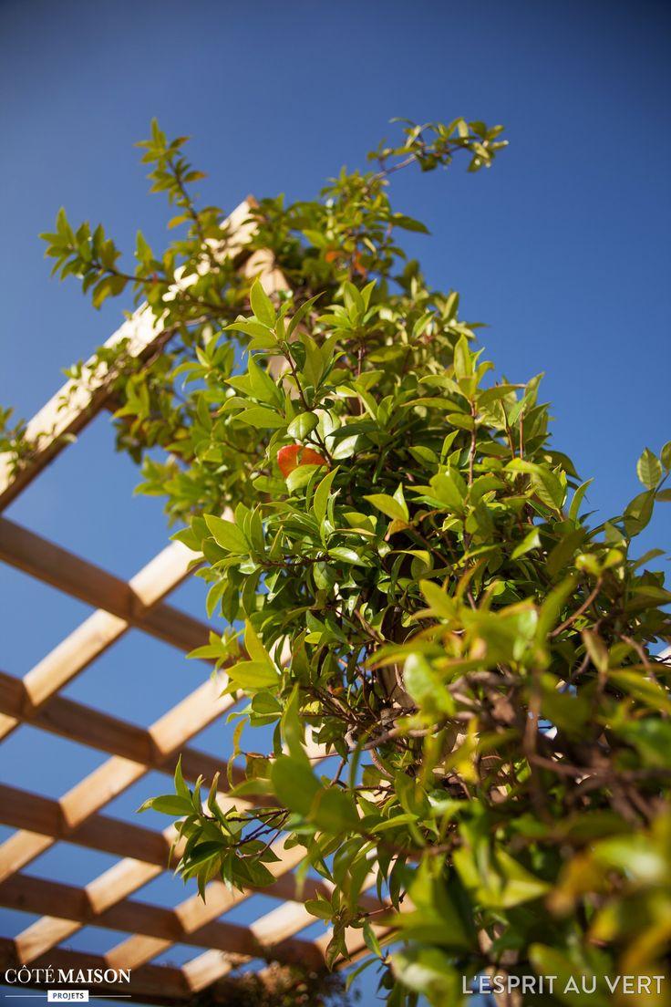Les 58 meilleures images du tableau jardinage et entretien for Entretien jardin 34