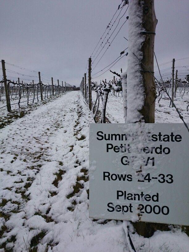 #SummitEstate snow #PetitVerdot block