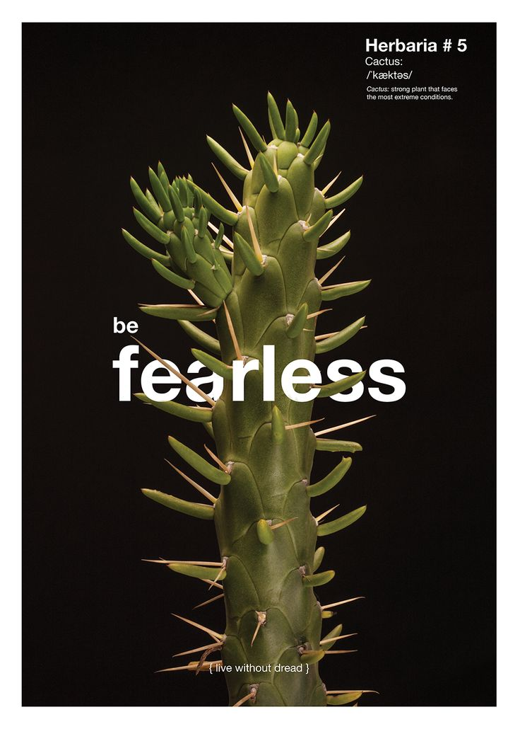 LECCIÓN No. 5 / SE VALIENTE {VIVE SIN MIEDO}  Planta: Cactus. Planta muy fuerte, capaz de enfrentar condiciones extremas.