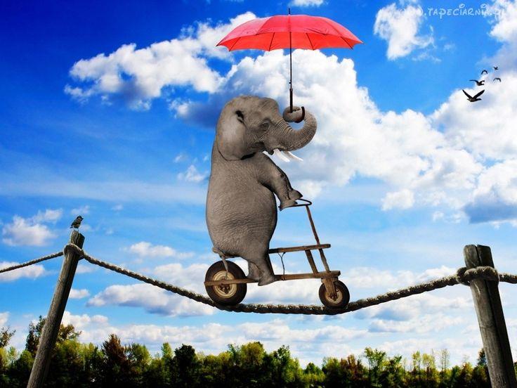 Słoń, Parasolka, Balansuje