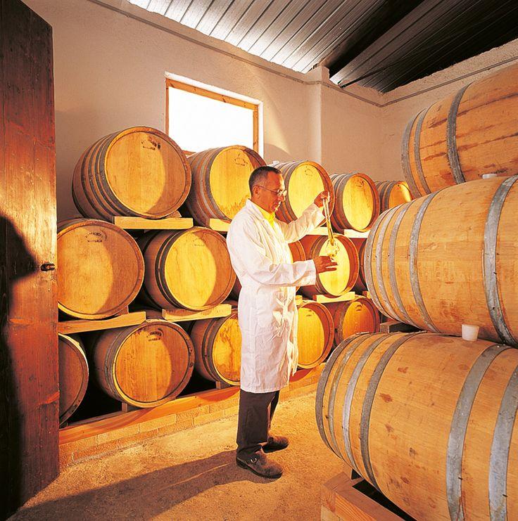 Azienda Cantine Lombardo www.cantinelombardo.it