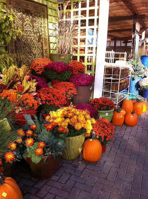 Mums the only way to bring fall colors to tx herbst for Dekoration und display