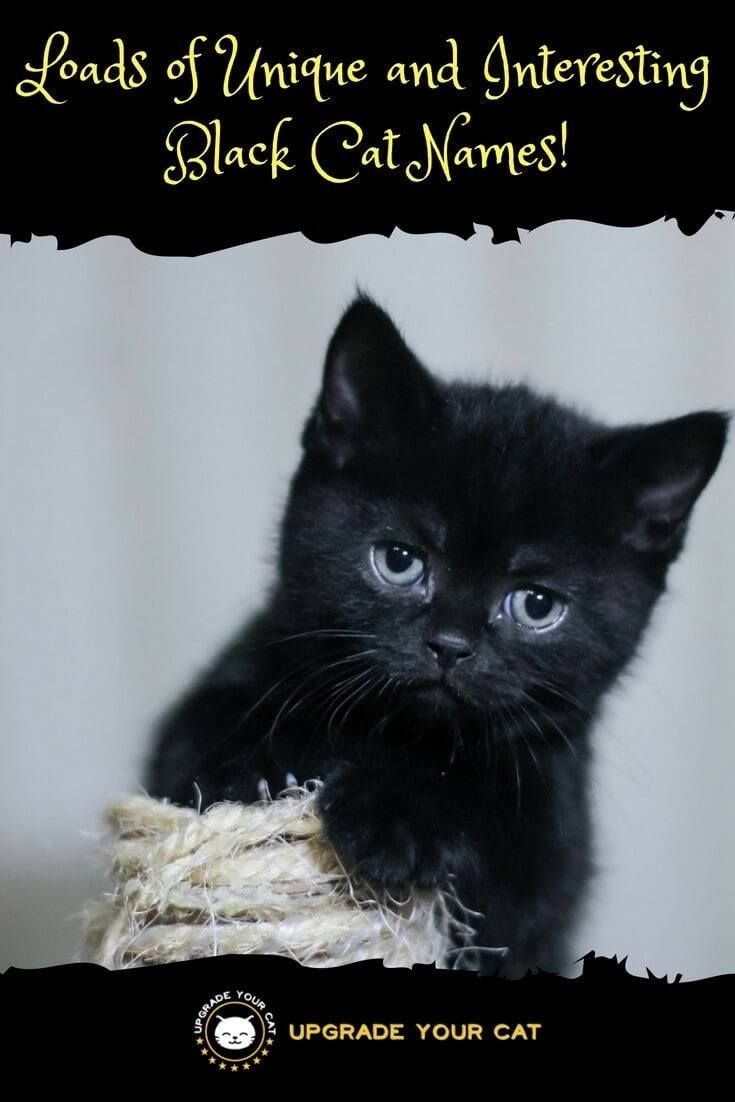 Huge List Of Unique Black Cat Names Upgrade Your Cat Cute Cat Names Kitten Names Unique Girl Cat Names