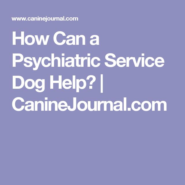 Psychiatric Service Dog Schizophrenia