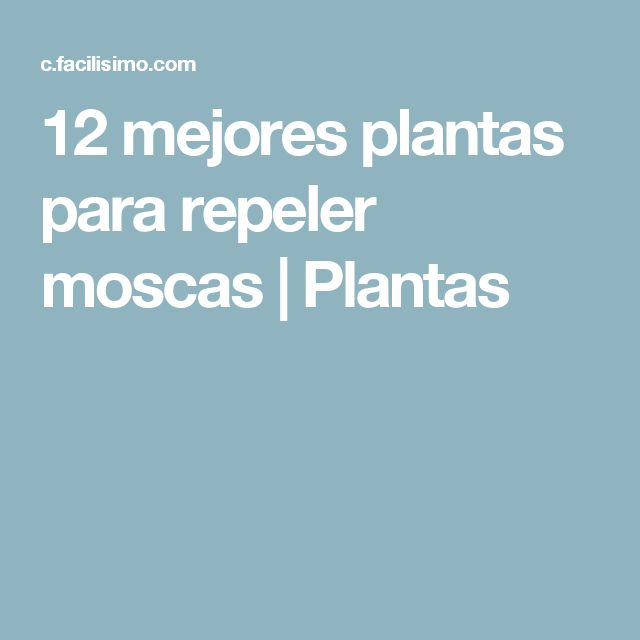 12 mejores plantas para repeler moscas   Plantas