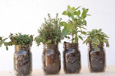 indoor garden- reuse mason jars. Cute and ecofriendly! #greenlife