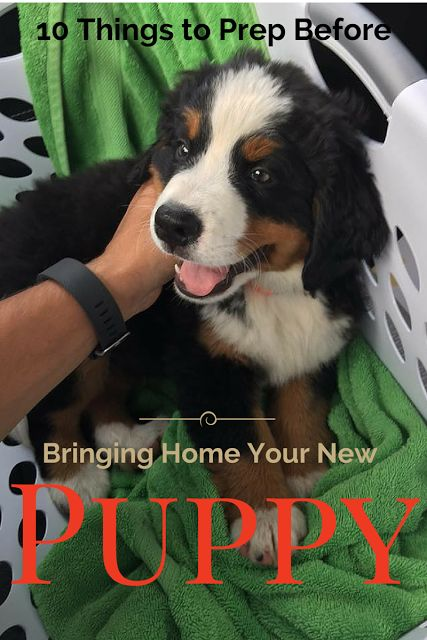 How to prep for bringing home a new puppy! Good to know and such cute pics too