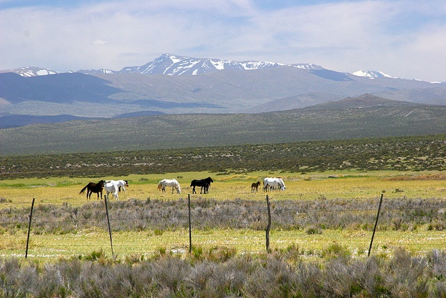 countryside of Mendoza Province in western Argentina