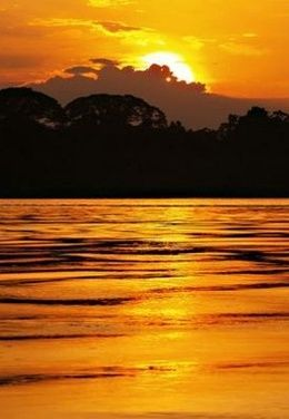 Amazon Rainforest, South America. This is a beautiful picture, but I still refuse to go there!