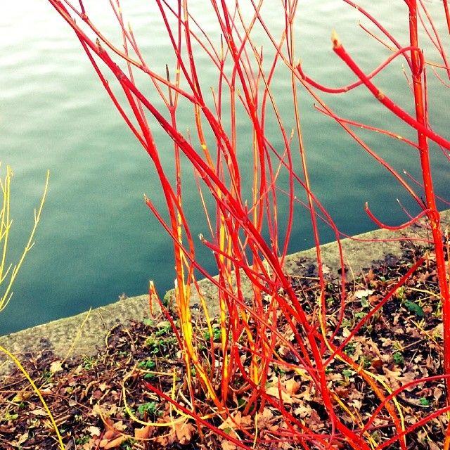 50 best redbridge essex images on pinterest centre for Pond reeds for sale