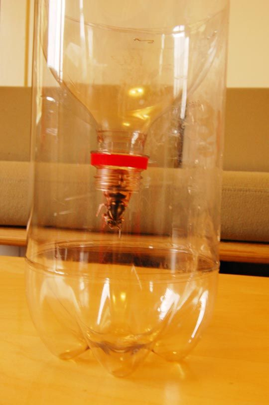 9 best images about keep the bees away on pinterest bees for Cut top off bottle