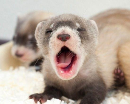 Tiny yawn.