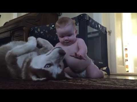 Baby Crawls Up to Husky to Say Hello. The Dog's Reaction Will Make Your Day (VIDEO) | One Green Planet