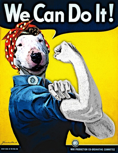 #Bullterrier Collage - We can do it!