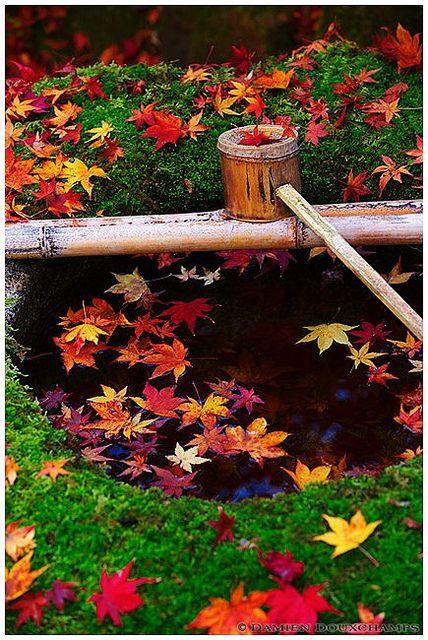 Garden of Daitoku-ji #kyoto #japan