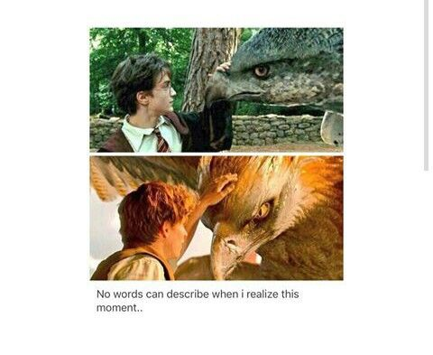 Harry Potter and Newt Scamander similarity.