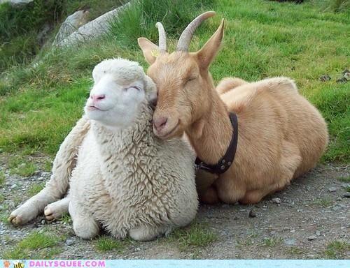 Happy farm animals - makes my heart sing