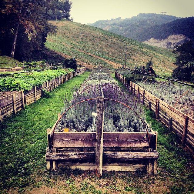 Erbe e frutti dimenticati, Casola Valsenio Foto by @rudyshecat