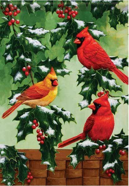 Holly and Cardinals