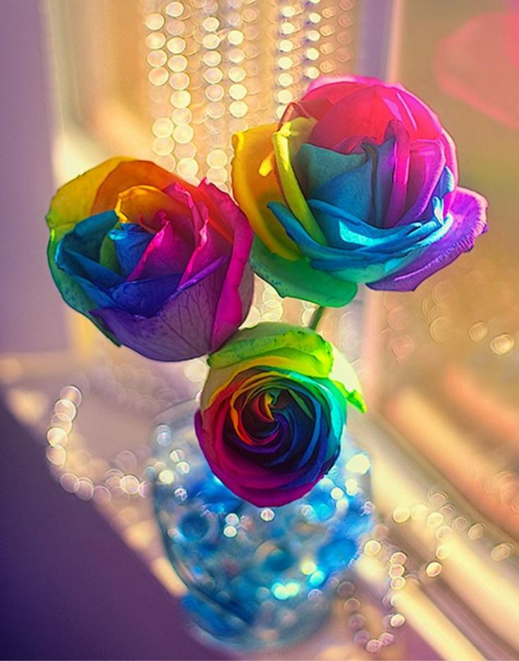 rainbow roses www.missdinkles.com