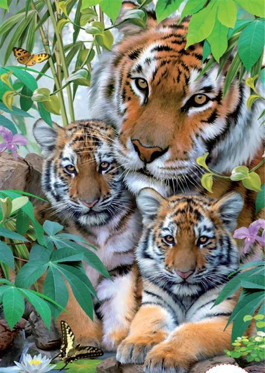 Тигр Семья окрашены Говард Робинсон, 1000 кусок головоломки, сделанное Ravensburger тигра-семьи-1000