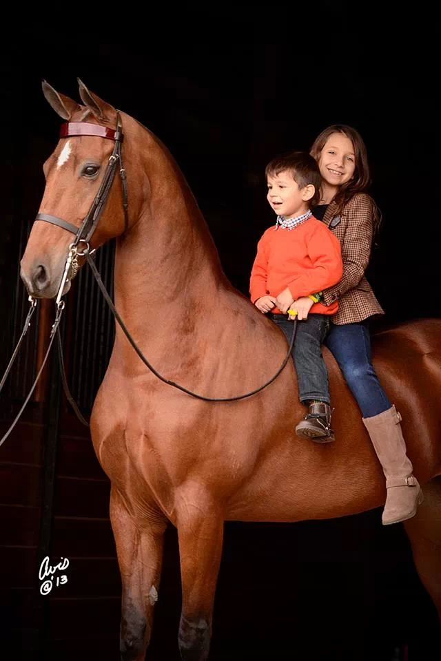 American Saddlebred with children