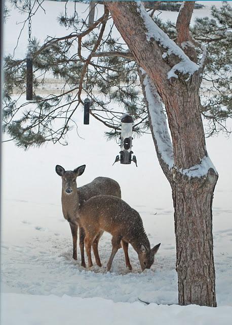 25 best ideas about winter scenes on pinterest snow for Deer scenery